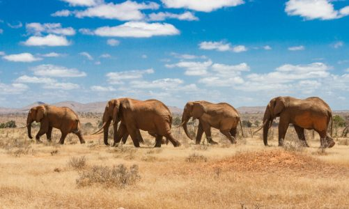 Kenya Safari from the UK – The Best Destinations, Packages, Costs, and Travel Guide