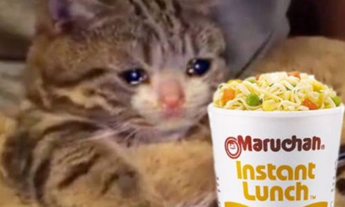 Profeco warns that it could withdraw Maruchan-type soups and the internet responds with memes
